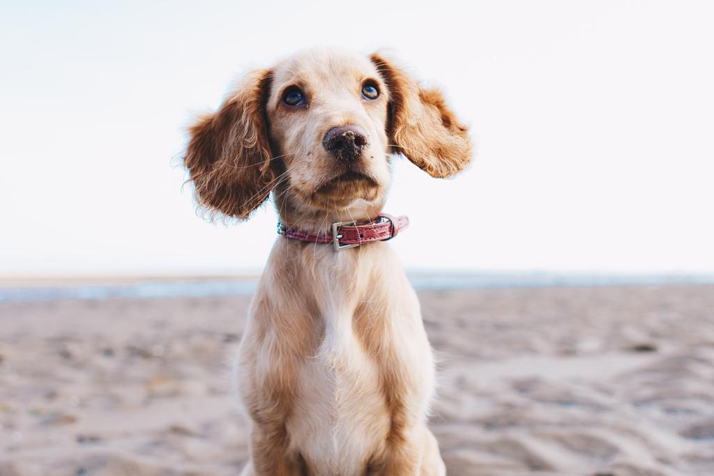 dog's body language, dog expressions, dog language, speak dog