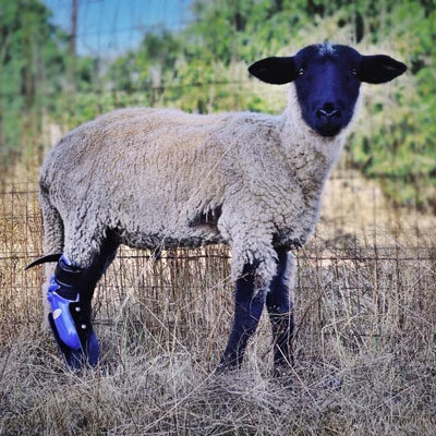 farm-animal-2